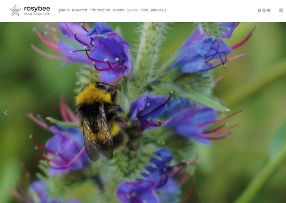 RosyBee Plants for Bees Website 2