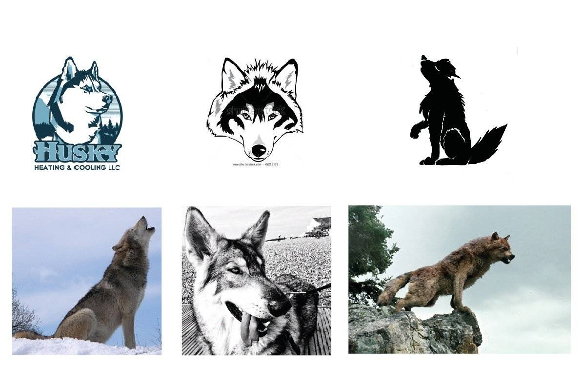 Wolf and Dog examples