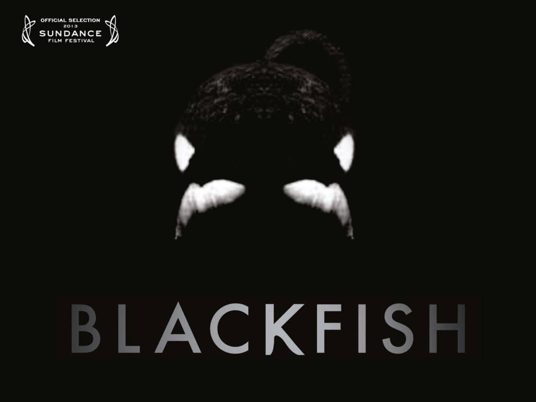 Blackfish Logo Sundance Film Festival