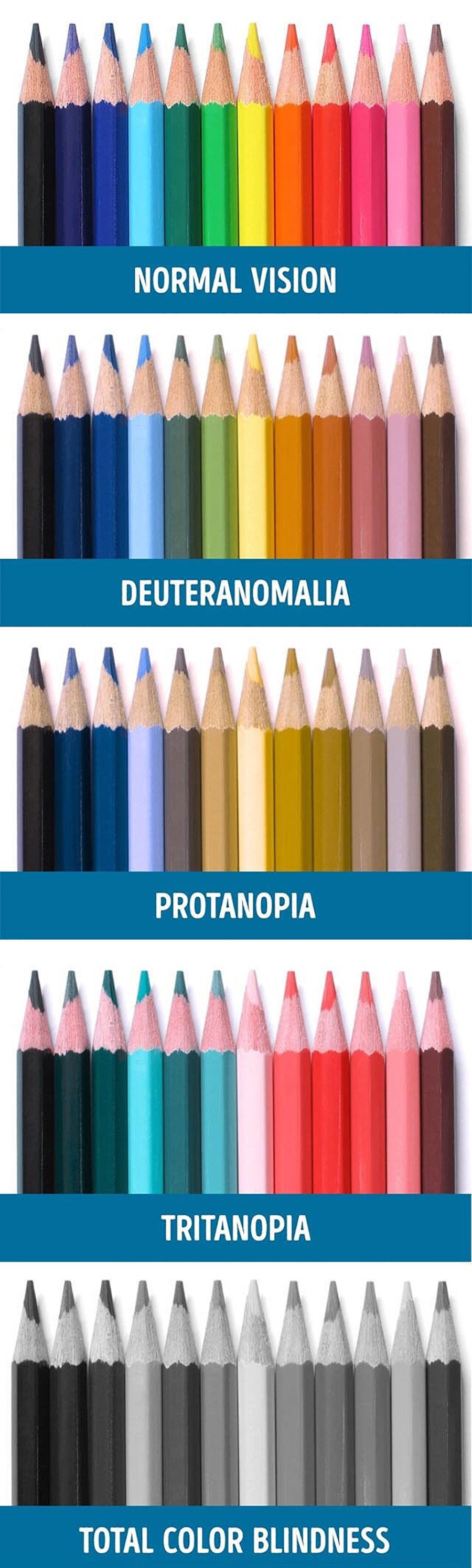 Color Blindness Demonstration Using Coloured Pencils