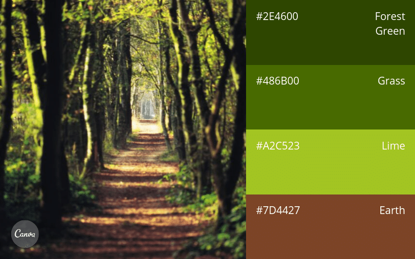 06.-Outdoorsy-_-Natural 100 Beautiful Colour Swatches and Combinations by Canva